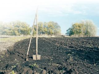 Почва для рассады: купить или везти с огорода?