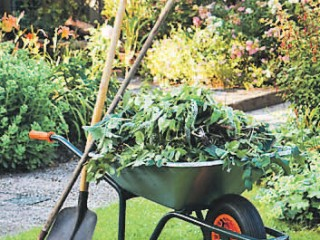 6 способов уходом за садом