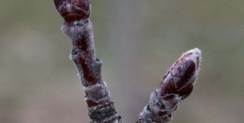 Мероприятия по уходу за яблоней в период фенофазы