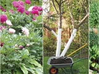 Компост для сада своими руками