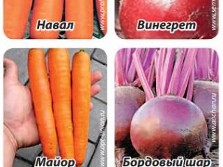 Новые сорта свеклы и морковки на пробу
