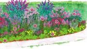Как привлечь бабочек в саду