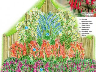 Сад для легкокрылых