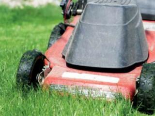Английский газон: стричь или не стричь?