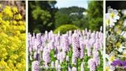 Какие цвета подобрать для сада, колористика сада