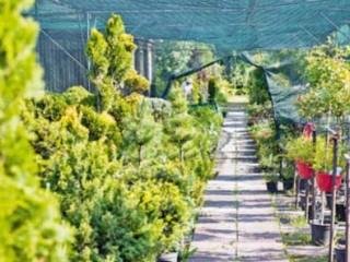 Декоративные деревья и кустарники - как купить, посадка