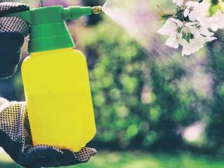 Как защитить сад от вредителей и себе не навредить