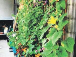 Какие декоративные растения подойдут для вашего балкона?