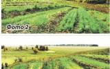Огород без полива