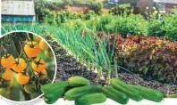 Сад, дарующий радость
