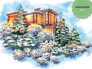 Зимний сад под Новый год