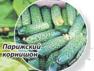 Выращивание засолочных огурцов
