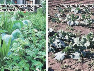 Смешанная посадка монокультурных растений