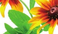 Продолжительность жизни цветов