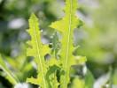 Виды, способы и методы борьбы с сорняками