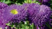Цветник для дорожки или лужайки