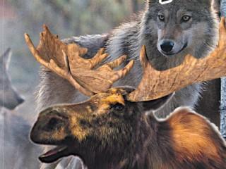 Что делать если если встретился дикий зверь в лесу