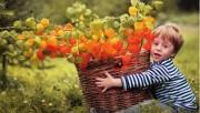 Физалис - и овощ и цветы на грядке