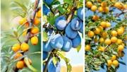Выбор плодовых растений