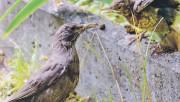 Если вы нашли птенца? Как помочь птенцу, выпавшему из гнезда