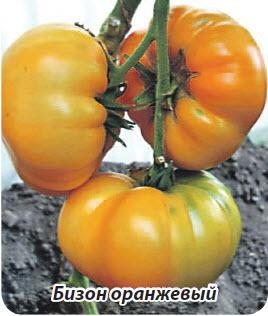 Сорт помидор Бизон оранжевый