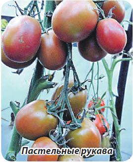 Сорт помидор Пастельные рукава