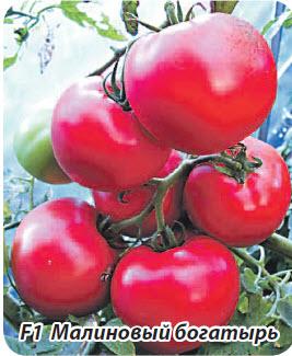 Сорт помидор  F1 Малиновый богатырь