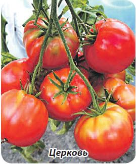 Сорт помидор Церковь