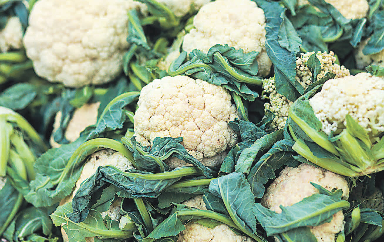 Выращивание цветной капусты 66