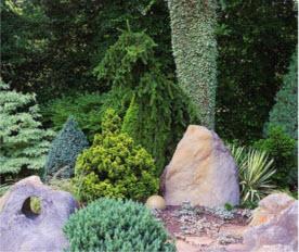 В рокарии высажены миниатюрные хвойные виды